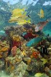 水下的风景与五颜六色的海洋生物 免版税库存图片