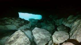 水下的风景和植被在湖cenote 影视素材