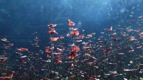 水下的风景和植被在湖cenote 股票录像
