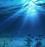 水下的风景和背景与海藻 免版税库存照片