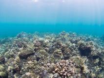 水下的风景在印度尼西亚 库存照片