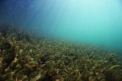 水下的风景在河 免版税库存图片