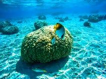 水下的风景在波里尼西亚 库存照片
