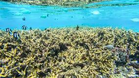 水下的风景在波里尼西亚 图库摄影