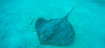 水下的风景在波里尼西亚 免版税库存照片