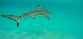 水下的风景在波里尼西亚 库存图片