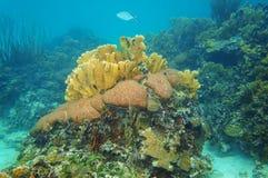 水下的风景在珊瑚礁加勒比海 免版税库存照片