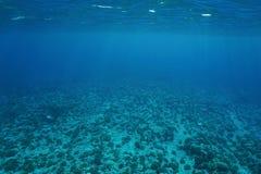 水下的风景海底太平洋 免版税库存照片