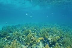 水下的风景珊瑚礁和海表面 免版税库存照片