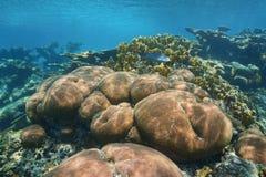 水下的风景石珊瑚礁石加勒比海 免版税库存图片