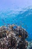 水下的风景 免版税库存图片