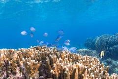 水下的风景 图库摄影