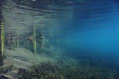 水下的风景 库存图片