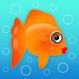 水下的鱼 库存图片