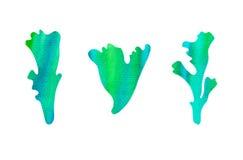 水下的水彩集合 手拉的各种各样的鲜绿色植物,海草,在白色背景 免版税库存图片