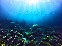 水下的sealife 库存照片