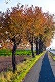 下自行车道步行结构树 免版税库存照片