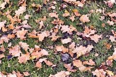 下落从树秋天橡木叶子 库存照片