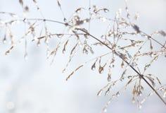 下落冰peaces种植词根水 库存图片