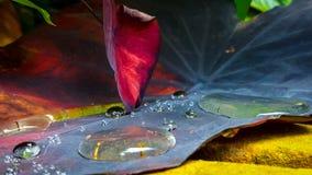 水下落和叶子 免版税库存图片