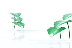 下落和植物白色背景的 免版税库存图片