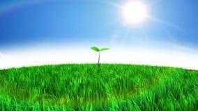 水下落在沙漠给新的生活 草和树生长美好的动画 到达天空的企业概念金黄回归键所有权 HD 1080 股票录像