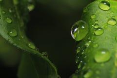 水下落宏观照片在叶子的 库存图片