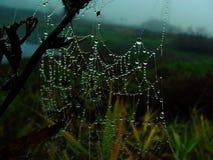 下落捉住了蜘蛛网 库存照片