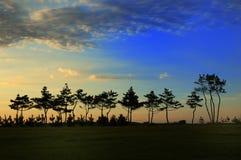 下落日结构树 库存图片
