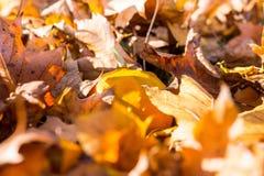 下落的五颜六色的叶子细节在草的在秋天的一个晴天 库存图片
