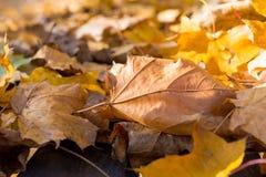 下落的五颜六色的叶子细节在草的在秋天的一个晴天 免版税库存照片
