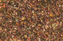下落的五颜六色的秋天在棕色森林土壤离开 库存图片