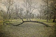 下落的南部橡树树 库存图片
