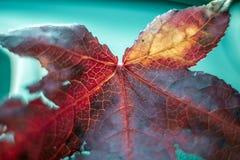 下落的叶子关闭,抽象软的焦点宏指令 免版税图库摄影