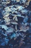 下落的叶子和冻橡木背景  免版税库存图片
