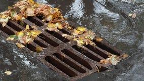 下落的叶子和水坑在都市流失栅格附近 影视素材