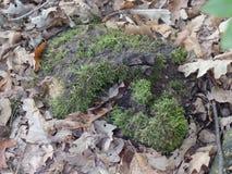 下落的叶子围拢的绿色青苔 免版税库存照片