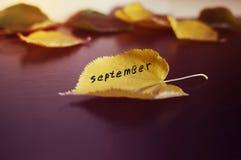 下落的叶子在一个木被上漆的委员会驱散了 秋天的概念 免版税库存照片