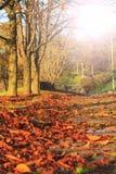 下落的叶子在城市在有晴朗的热点的步行路停放 免版税库存照片