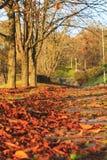 下落的叶子在城市在步行路停放 免版税库存照片
