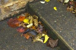 下落的叶子在步积累石台阶 库存照片