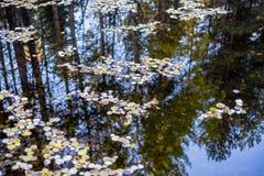 下落的叶子在水在秋天落 免版税库存图片