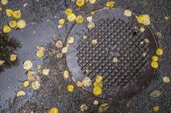 下落的叶子在湿沥青和金属盖子说谎  库存图片
