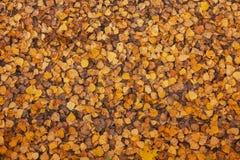 下落的叶子在秋天森林里 图库摄影