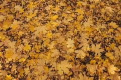 下落的叶子在秋天森林里 免版税库存照片