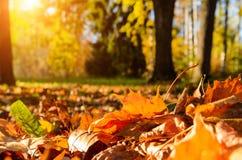 下落的叶子在秋天森林里 库存照片