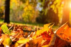 下落的叶子在秋天森林里 免版税库存图片