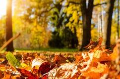 下落的叶子在秋天森林里 免版税图库摄影