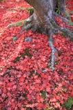 下落的叶子在秋天,京都 免版税库存照片