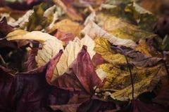 下落的叶子在秋天 免版税库存照片